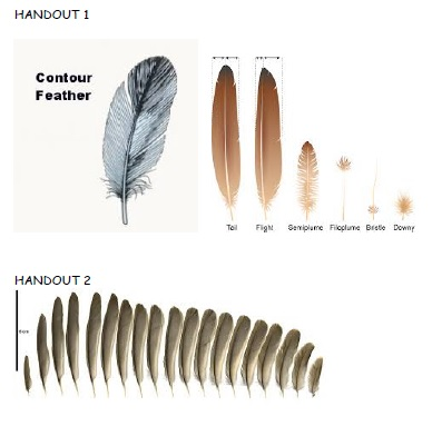 [/userfiles/files/fact16-feathers-pic.jpg]